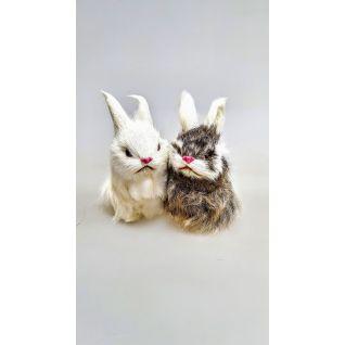 Кролик средний